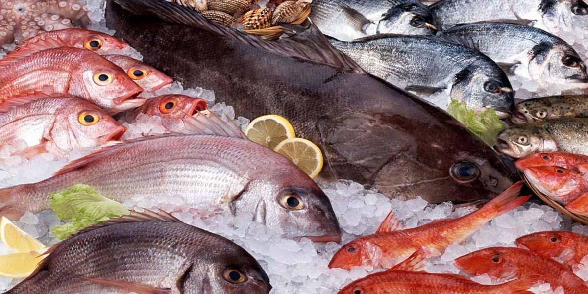 سردخانه ماهی
